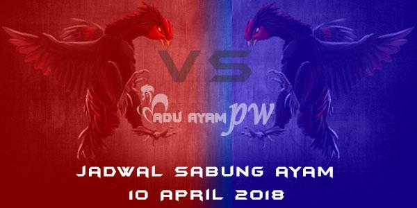jadwal sabung ayam 10 April 2018