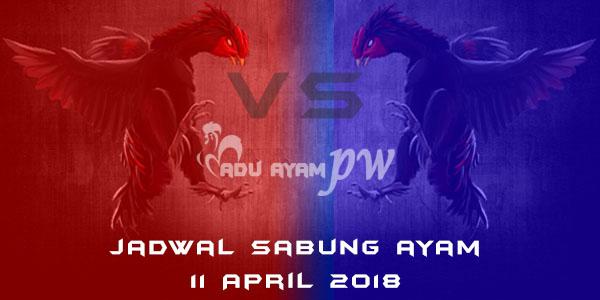 jadwal sabung ayam 11 April 2018