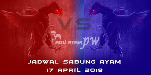 jadwal sabung ayam 17 April 2018