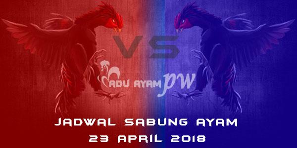 jadwal sabung ayam 23 April 2018