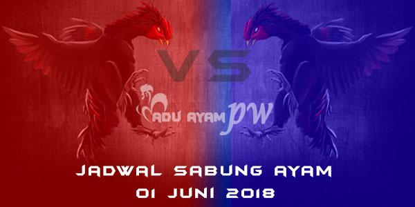 jadwal sabung ayam 01 Juni 2018