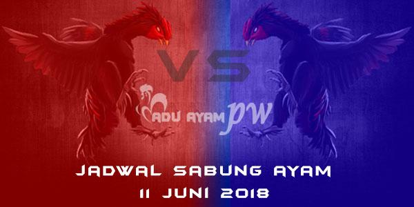 jadwal sabung ayam 11 Juni 2018