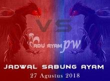 Jadwal Sabung Ayam 27 Agustus 2018