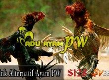 Link Alternatif Sabung Ayam PW