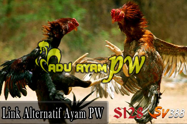 Link Alternatif Sabung Ayam PW