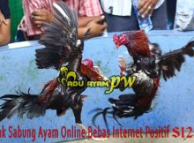 Link Sabung Ayam Online Bebas Internet Positif