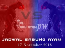 Jadwal Sabung Ayam 17 November 2018