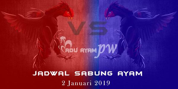 Jadwal Sabung Ayam 2 Januari 2019
