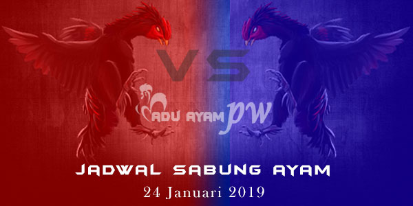 Jadwal Sabung Ayam 24 Januari 2019