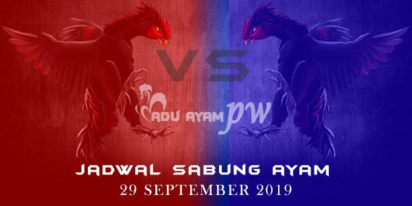 Jadwal Pertarungan Sabung Ayam Live 29 September 2019
