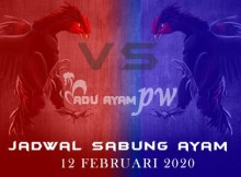 Jadwal Resmi Adu Ayam Online 12 Februari 2020