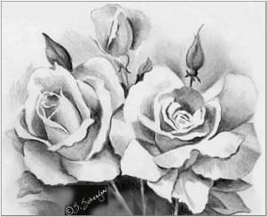 Contoh Gambar sketsa rangkaian bunga mawar