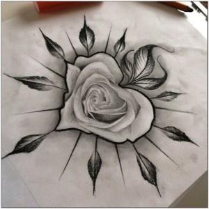 Koleksi Sketsa bunga mawar dengan pensil