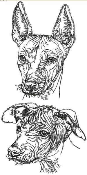 Draw You Dog How Cute
