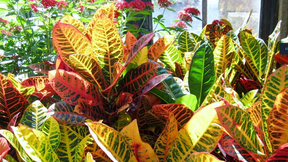 Indoor Plants Good Oxygen