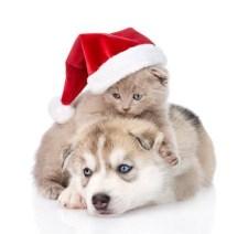 Julekalender til hund og katt