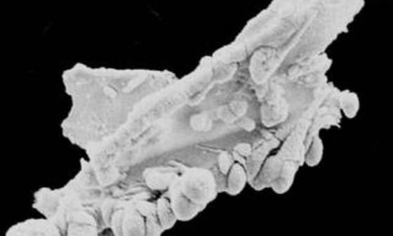 A 'partícula do dragão' cuja análise científica mostra que é composta de carbono e oxigênio - / Divulgação