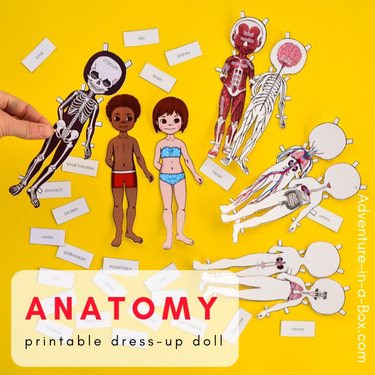 Anatomy Dress-Up & Magnetic Paper Dolls | Adventure in a Box
