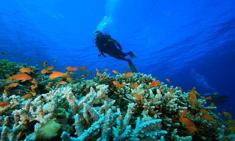 Long term Diver Havelock 1