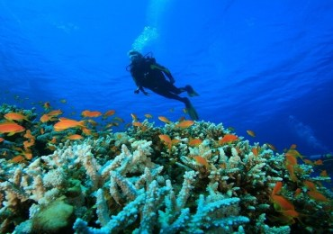 Havelock & Neil Scuba Diving Package