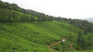 1024px Chembara Peak Wayanad Kerala India South Asia