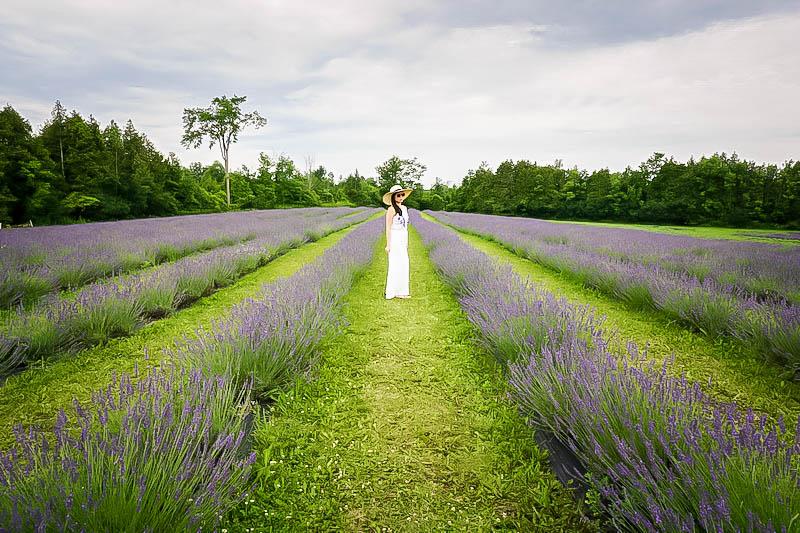 Terre Bleu Lavender Farm 2