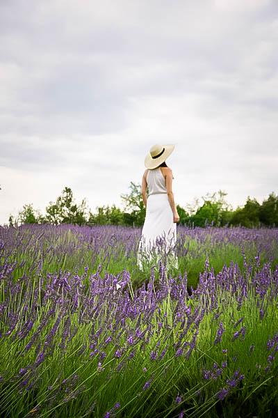Terre Bleu Lavender Farm 3