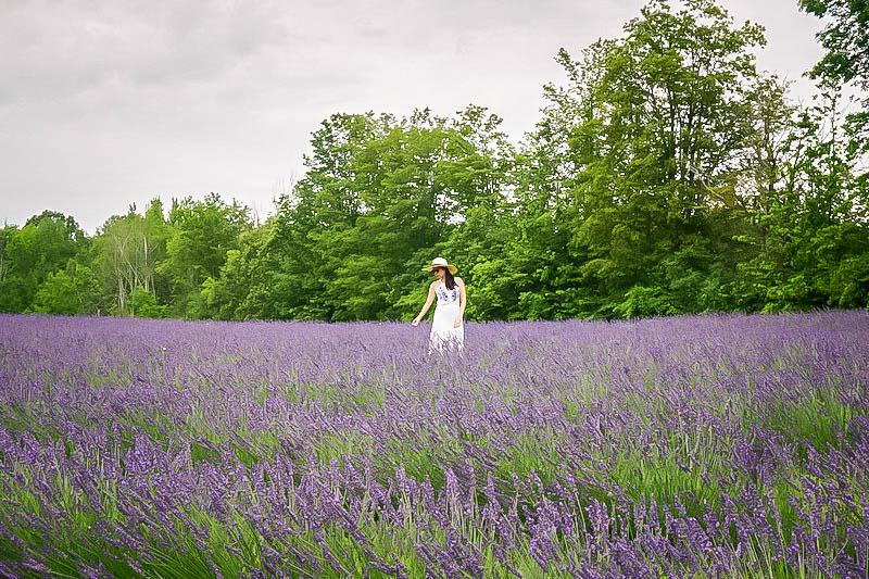 Terre Bleu Lavender Farm 4