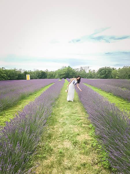Terre Bleu Lavender Farm 6