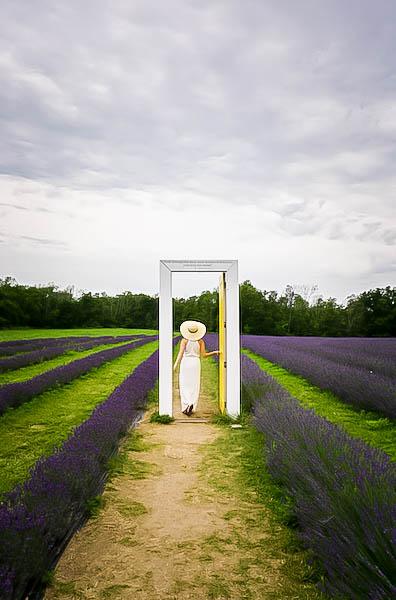 Terre Bleu Lavender Farm Yellow Door