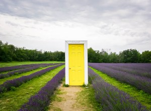 Summer Visit to Terre Bleu Lavender Farm