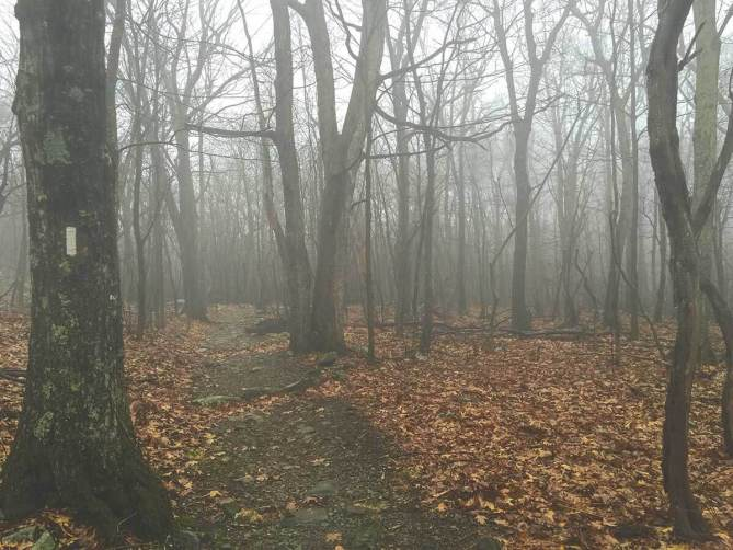 Mostly rain and mist all day along the ridge