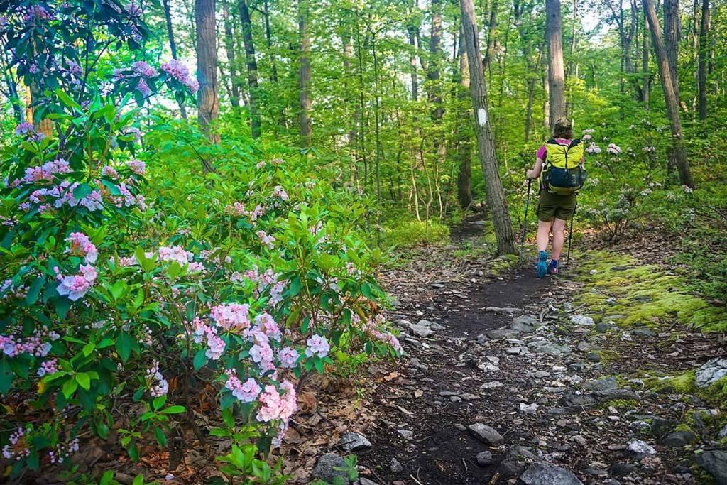 moutain-laurel-trail-1200-flip