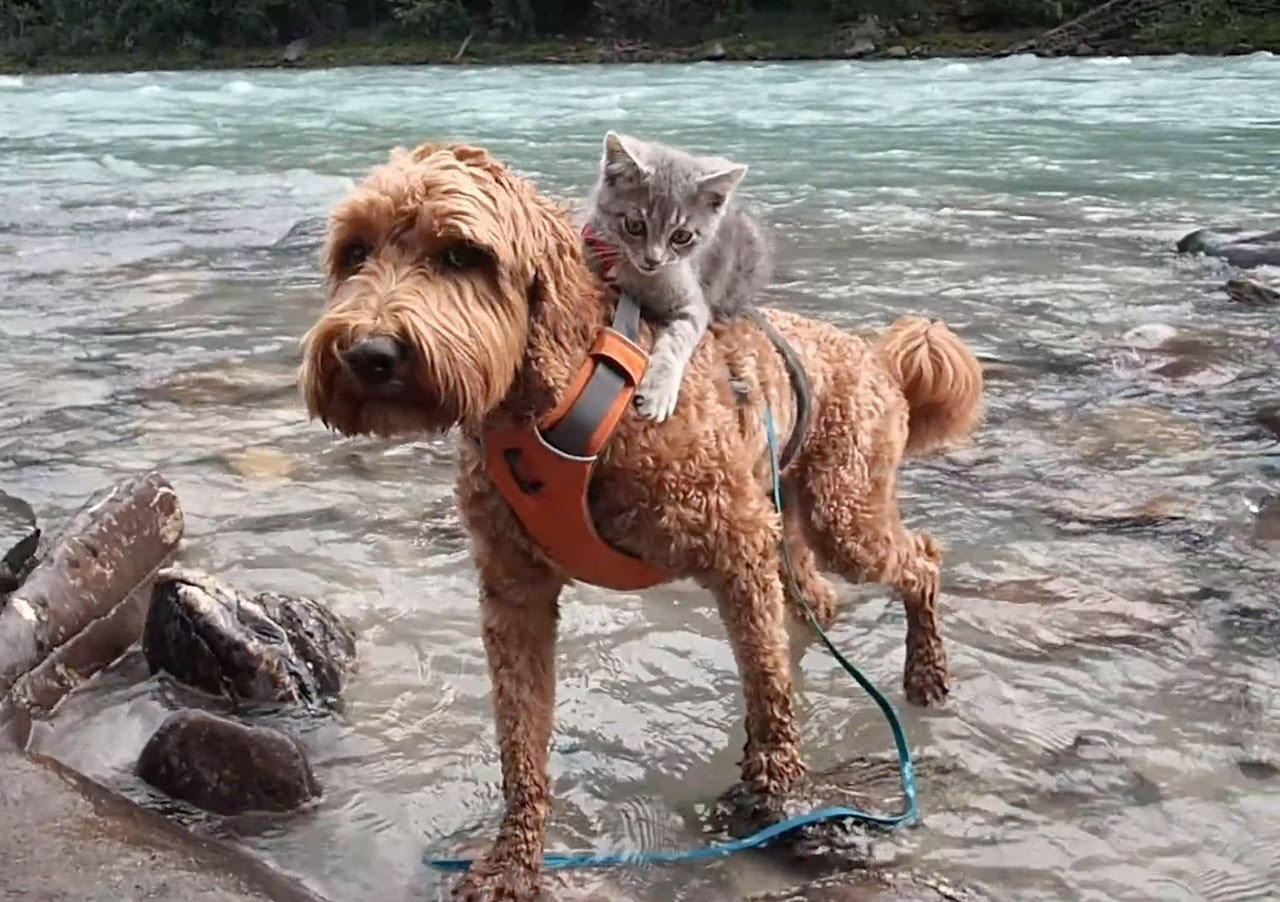 These Pet Pals Prove That A Dog Can Be A Cat S Best Friend