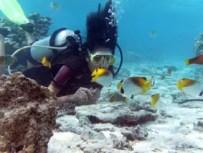 Refresher Dive Cook Islands