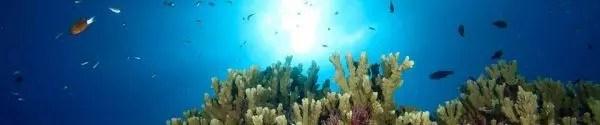 Rarotonga scuba diving