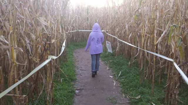 Uncle Shuck's Corn Maze Georgia Walking the Corn Maze 3
