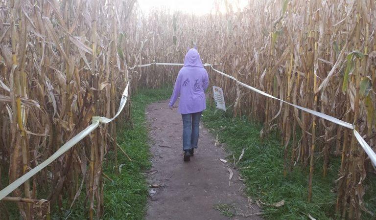 Escape Medusa's Gaze at Uncle Shuck's Corn Maze