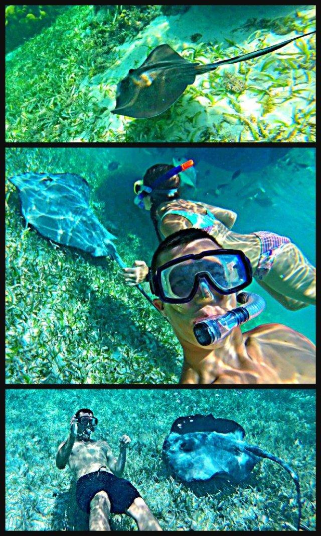How to swim with sharks Caye Caulker Belize stingrays