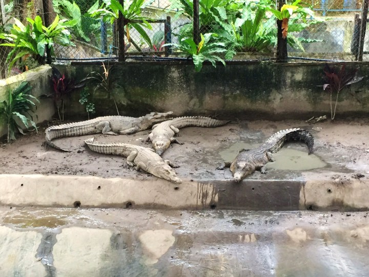Sandakan crocodile farm things to do in Sandakan