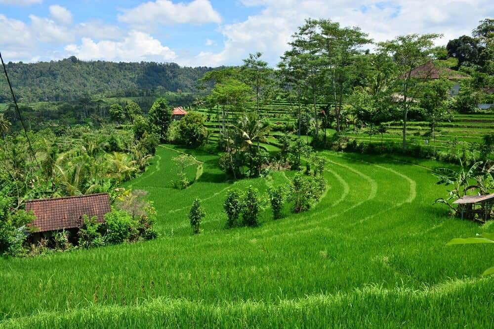 Sidemen Things to do in Bali Indonesia
