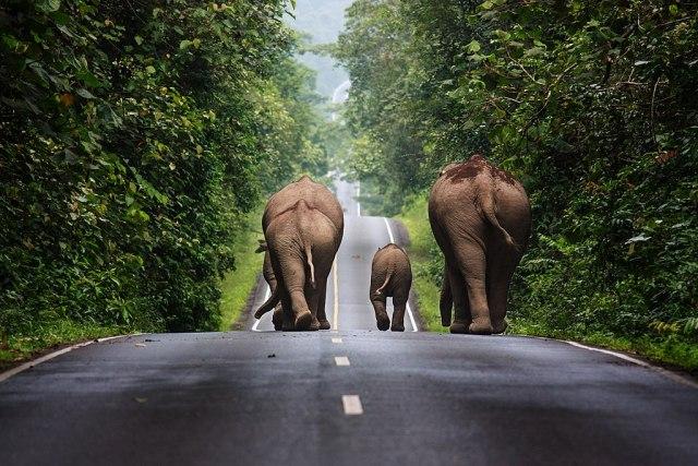 Khao Yai National Park, Nakhon Ratchasima