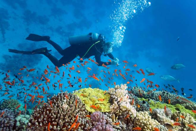 Image result for scuba diving in phu quoc
