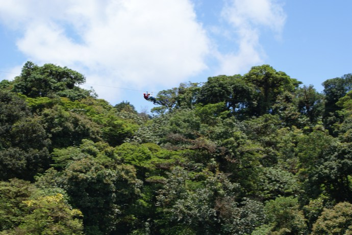 Zip-lines above the jungle canopy.