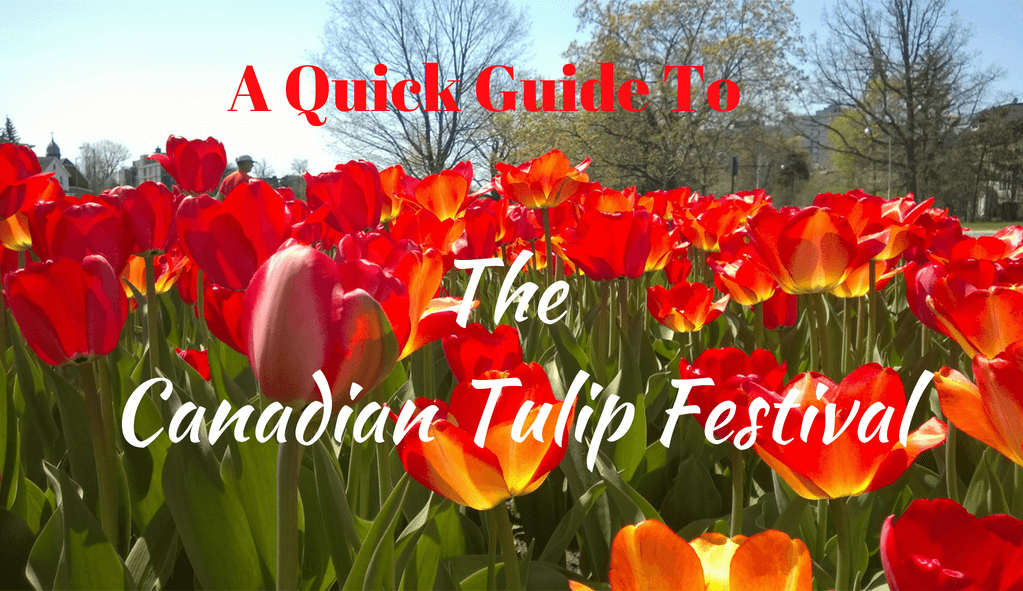 A Quick Guide To The Canadian Tulip Festival