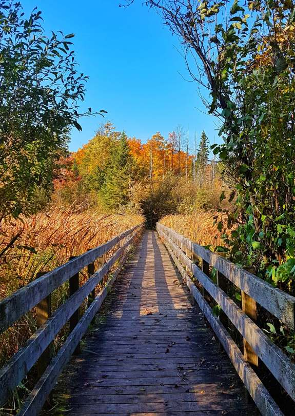 Boardwalk in Ottawa's Greenbelt (Jack Pine Trail).