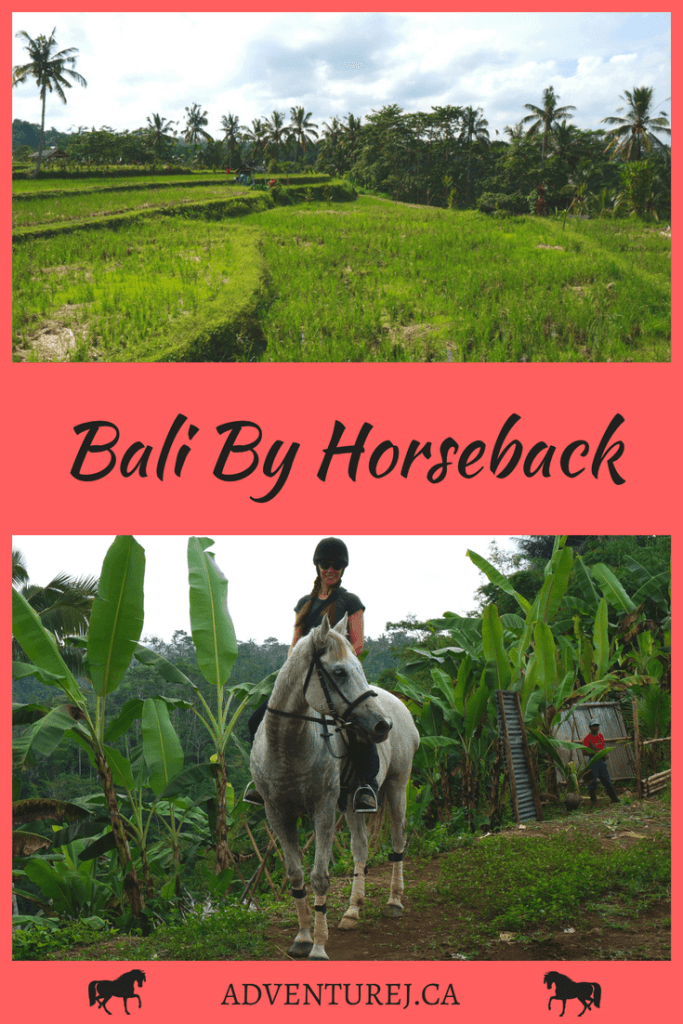 I love to horseback ride when I travel so when I discovered that I could go riding in the beautiful Balinese countryside, I signed right up!   #horseback #horsebackriding #travel #Bali #Indonesia #outdoors #riding #horses