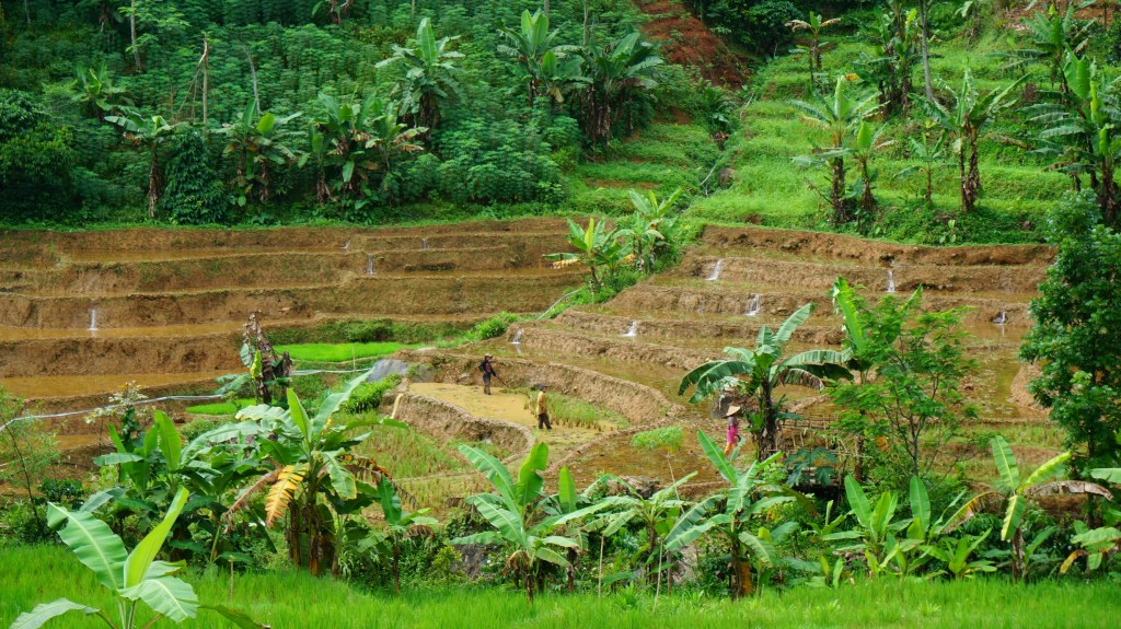 Farmers working in the terraces.