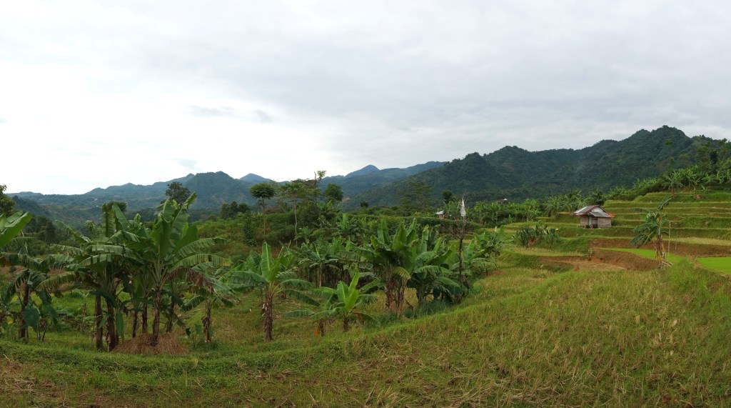 Rice terraces in the countryside.