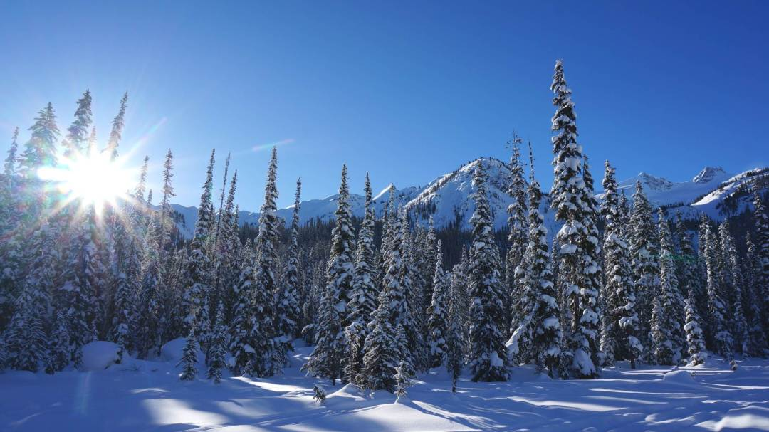 Winter in BC's backcountry near Golden.